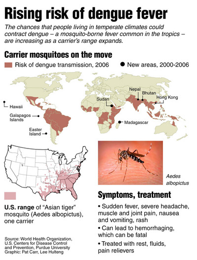 Dengue Fever Prevention Tips Health Giants